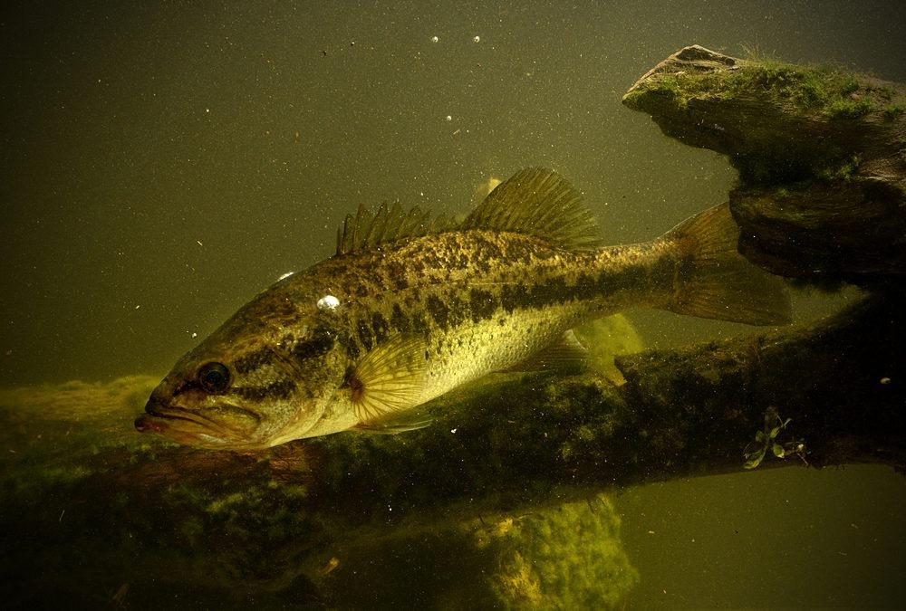 Florida Bass Fishing