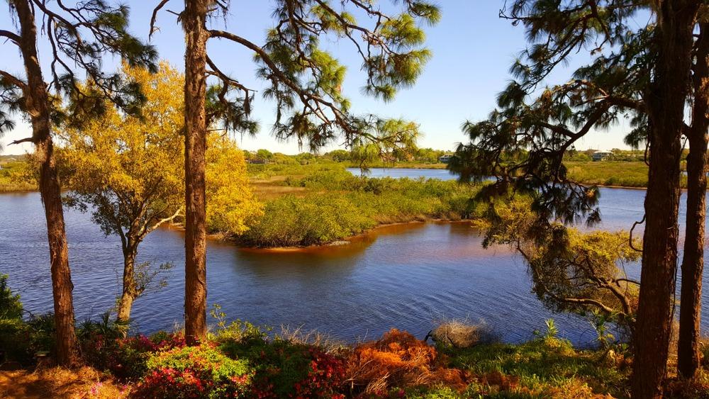 Lake Tarpon Fishing