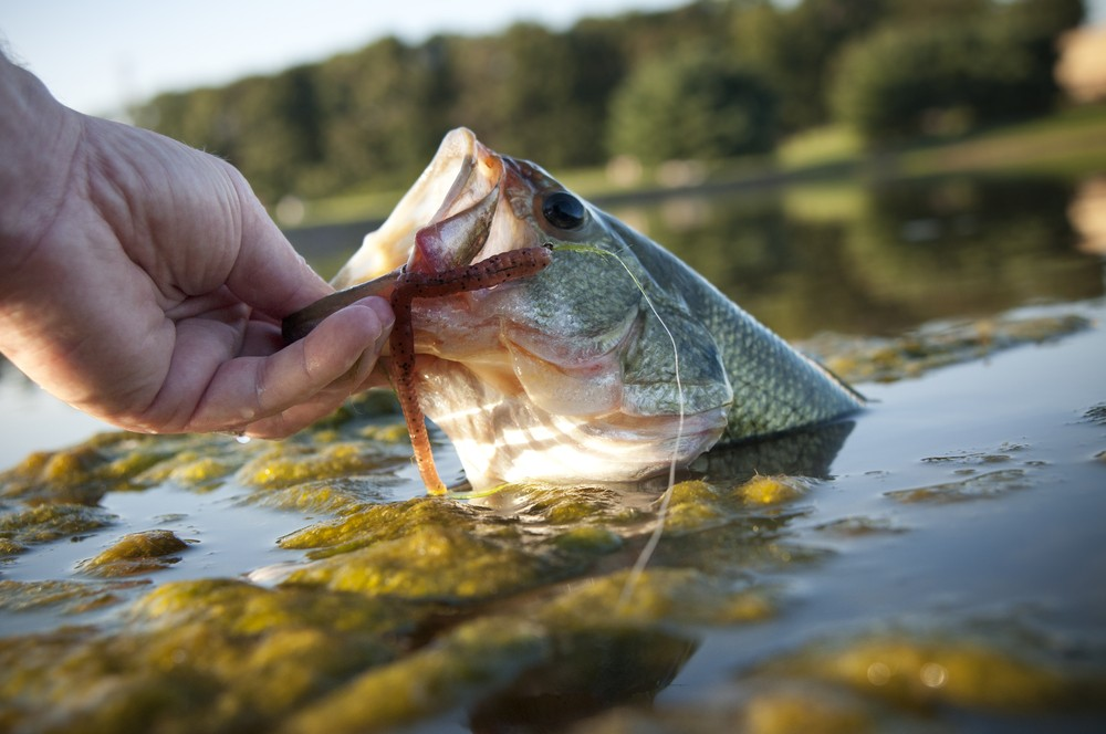 Catch the Biggest Bass Fish with This Orlando Fishing Guide