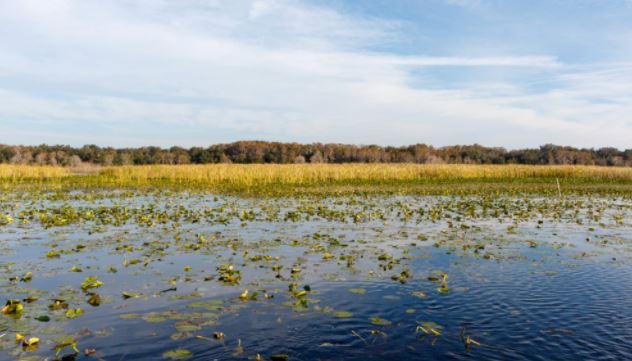 Lake Toho Vegetation